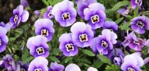 Rože, ki cvetijo tudi pozimi!